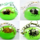 Wholesale Lot 6 Real Insect Bug Oval Amber Bracelets New