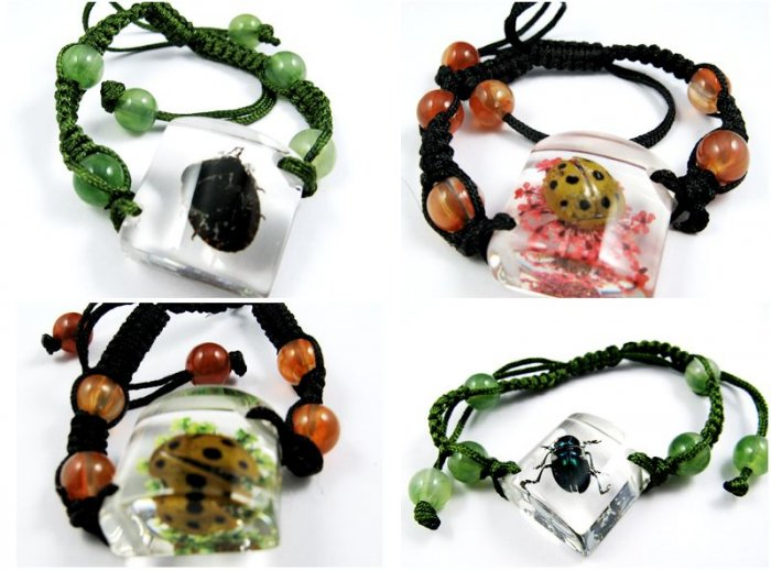 Wholesale Lot 6 Real Insect Bug Amber Rhombus Bracelets