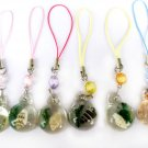 Wholesale Lot 12 seashell Cellhphone Mobile Strap String New