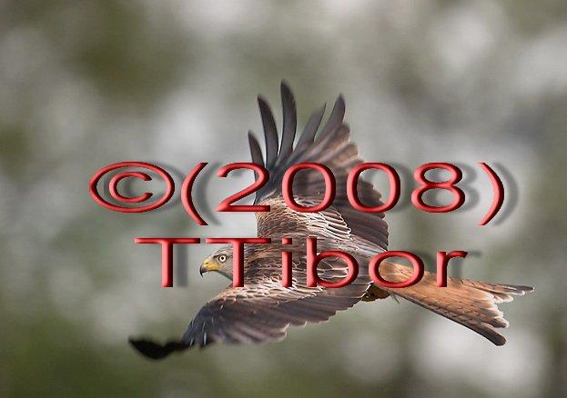 Falcon*03*