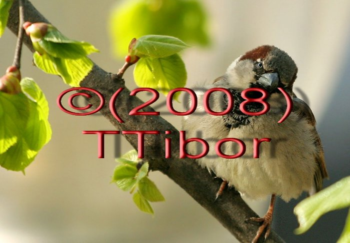 Bird*02*
