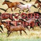 Horses*05*