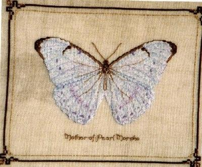 RARE INSECT STUDY TERRY NOLAN CROSS STITCH KIT MOTHER OF PEARL MORPHO BUTTERFLY