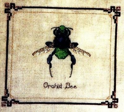 RARE INSECT STUDY TERRY NOLAN EMERALD ORCHID BEE CROSS STITCH KIT