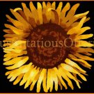DRAMATIC JOY CAMPBELL FLORAL CREWEL EMBROIDERY KITBOLD SUNFLOWER PILLOW
