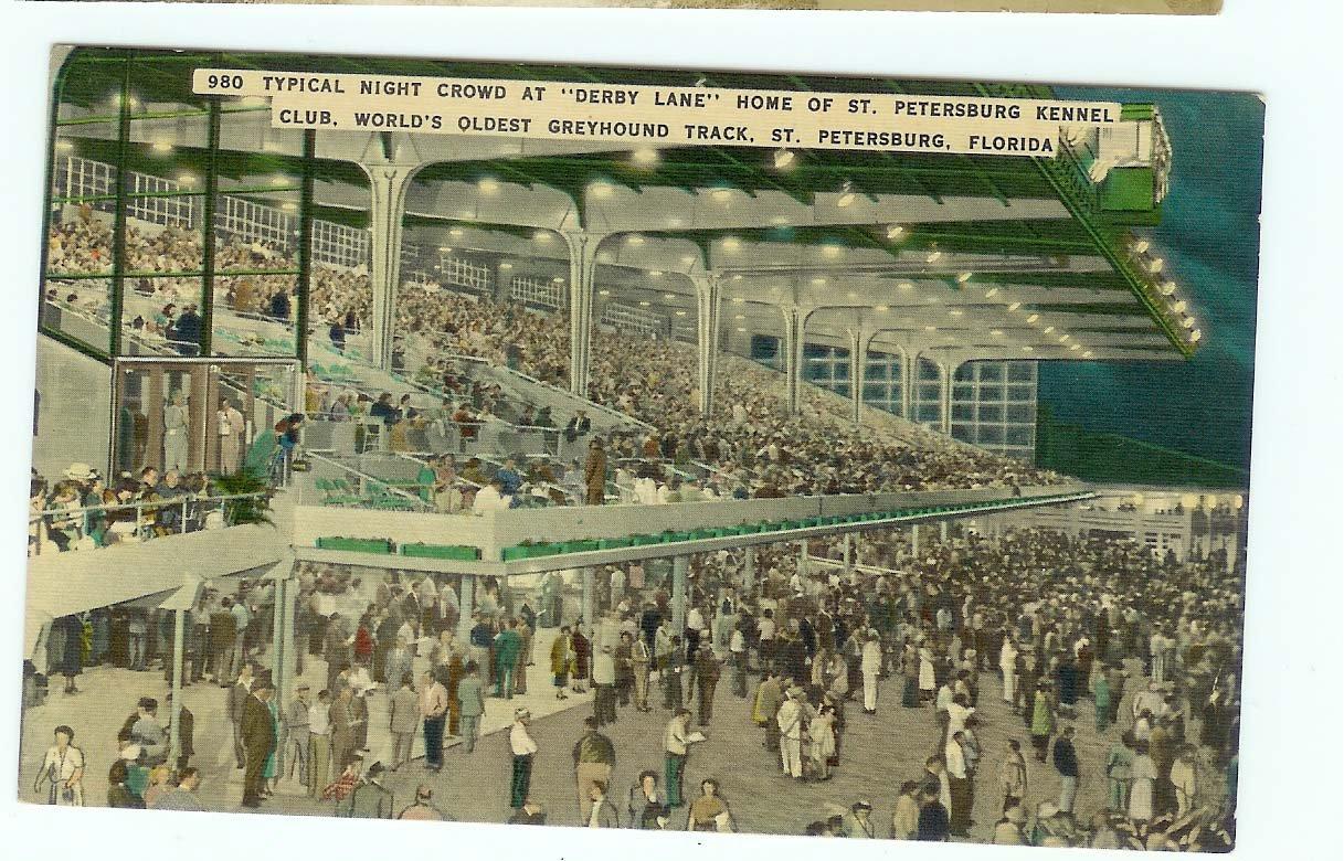 Derby lane Greyhound Postcard Florida unused Linen ST Petersburg FL