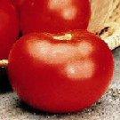 Marion Tomato Seeds- 200