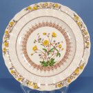Spode Buttercup (Newer Backstamp) Salad Plate