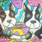Do Boston Terriers Have Coffee?
