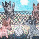 Do Australian Cattle Dogs Play Volley Ball?