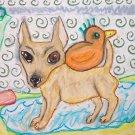 Chihuahua Takes a Bath II