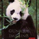 Toledo Zoo 1988 Panda Postcard FREE SHIPPING