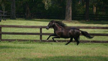 The Black Stallion (DVD, 1990) NEW Free Shipping