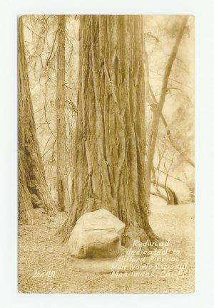 Gifford Pinchot Redwood Muir Woods Nat. Mon. Calif RPPC