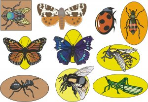 Insects Wall Decal Assortment Packs