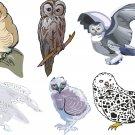 Owls Wall Decal Assortment Packs