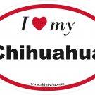 Chihuahua Oval Car Sticker