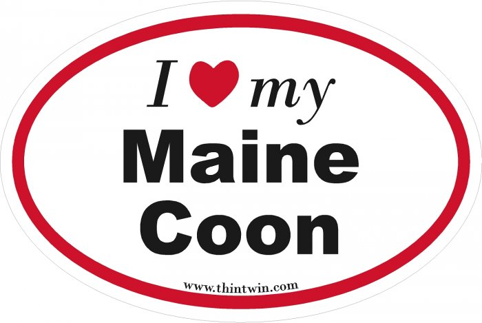 Maine Coon Oval Car Sticker