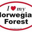 Norwegian Forest Oval Car Sticker