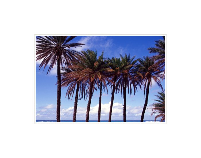 """""""Palms"""" Matted Inkjet Print"""
