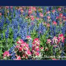 Texas Spring Fine Art Print of Bluebonnets and Indian Paintbrush