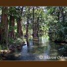 Frio River in Texas Fine Art Photography