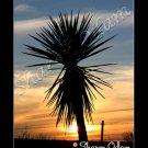 Beautiful Texas Sunset and Yucca Fine Art Photography