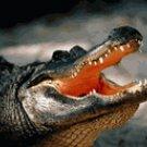 Alligator Burgers