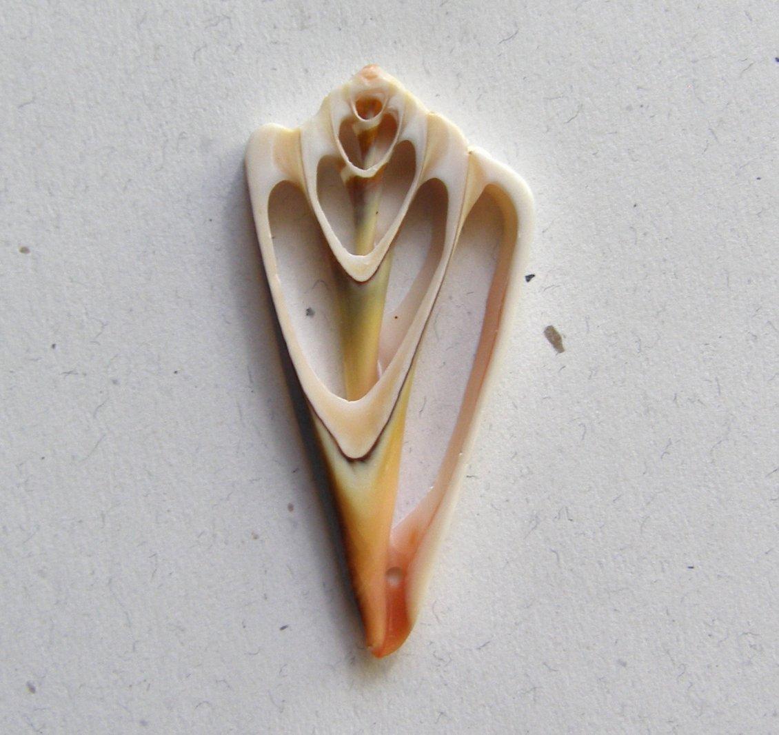 Natural Sea Shell 56x27 Slice Pendant Bead