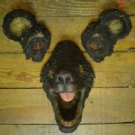 Black Bear Tree Face