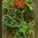 FOLIAGE HOUSE PLANTS/TIME-LIFE ENCYCLOPEDIA OF GARDENING