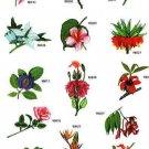 Exocit Flowers