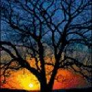 Counted Cross Stitch Pattern - Sunset Lit Tree