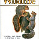 A Country-Lover's Guide To Wildlife: Mammals, Amphibians, And Reptiles Of The Northeastern US