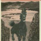 Walker, Ronald G. Infernal Paradise: Mexico and the Modern English Novel