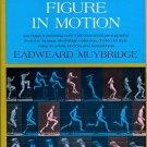 Muybridge, Eadweard. The Human Figure in Motion