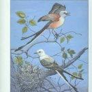 Baumgartner, Frederick M, and Baumgartner, A. Marguerite. Oklahoma Bird Life