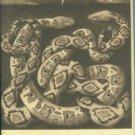 Claremon, Neil. Calendar Of Animal Messengers: Teachings from the Desert