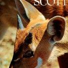Scott, Peter and Philippa. Animals In Africa