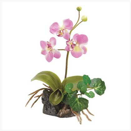 EVERLASTING PINK ORCHID