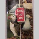 Birds Of The Coast - Sea Birds - Jarrold Bird Series, Book 2
