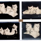 4 Original Kitten Photo Prints by Bradley R. Currey