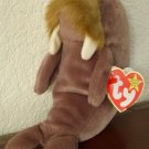 Jolly the Walrus: Retired Ty Beanie Baby