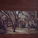 Moss Draped Live Oaks Mirro-Krome Postcard Post Card, Used, 1953