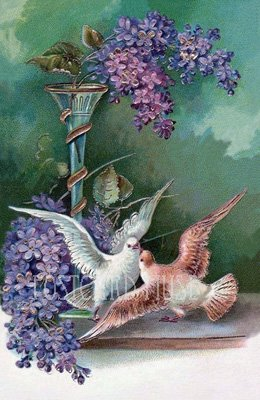 TWO DOVES WITH LILAC Antique Postcard Reproduction