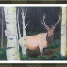 Elk in Birch Forest