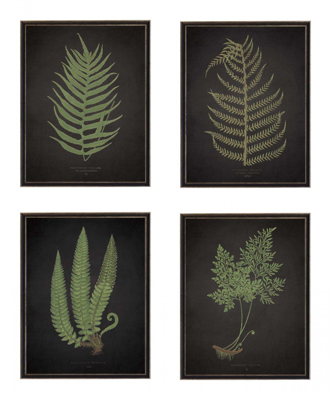 Antiqued Framed Fern Prints - Set of 4