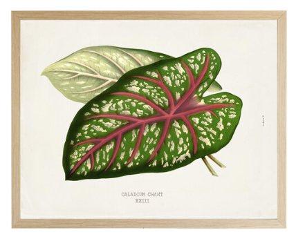 Leaf-102