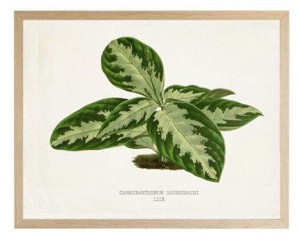 Leaf-106