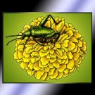 Beetle On Yellow Bloom